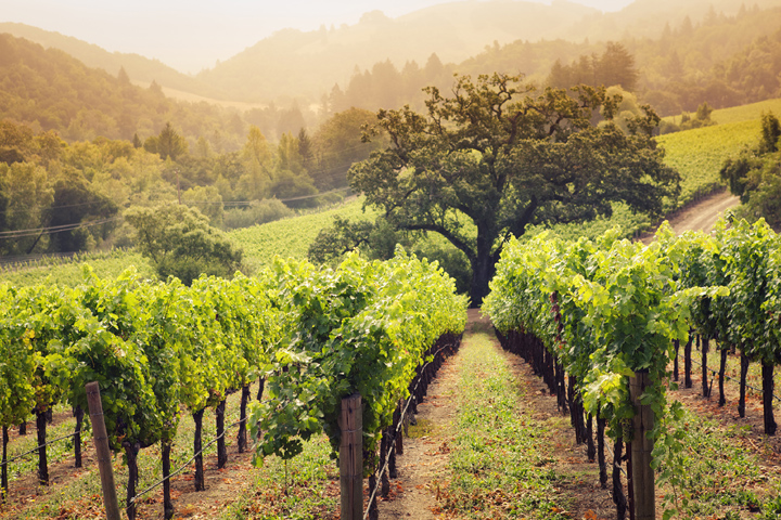 Contribution to Napa Valley Tours and Transportation